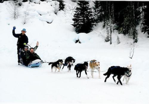 Go dogs, go!