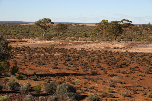 Red earth, green plants