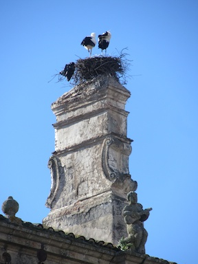 Storks like palace chimneys