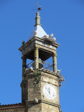 Storks like palace clock towers