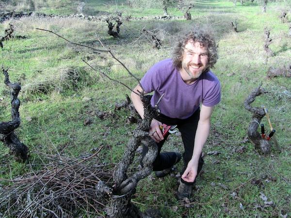 Vine-pruner extraordinaire