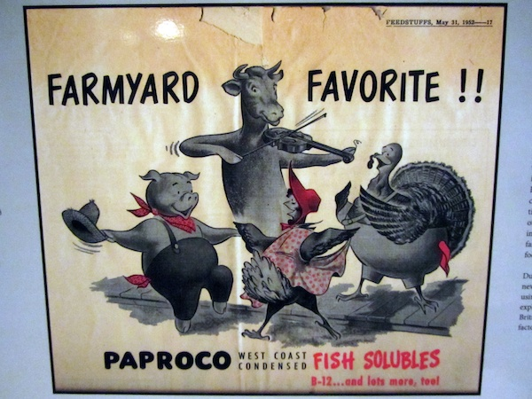1950s advert for fish meal animal fodder