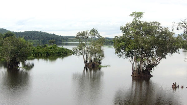 Mangrove islands on Kolam Bukit Merah