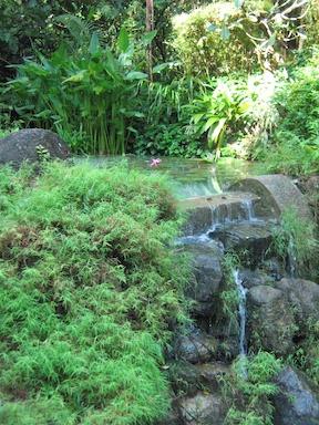 Penang's Tropical Spice Garden