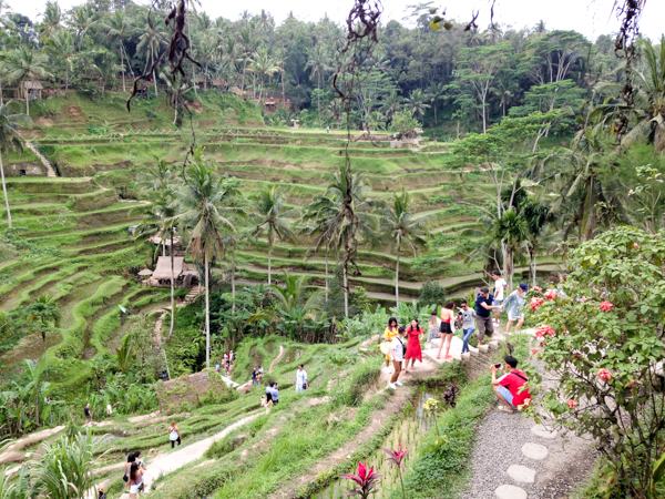 Tegallalang Rice Terraces