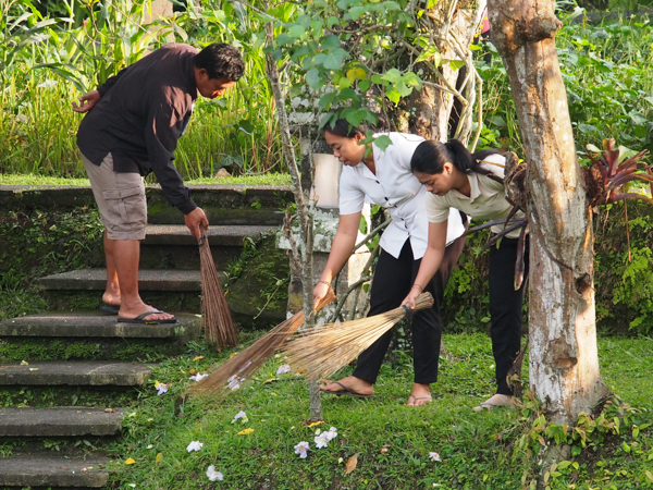 Collecting fallen flowers to decorate Hindu shrines and statues yin Ubud.
