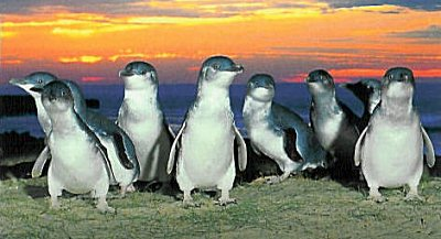 You're not allowed to photograph the penguins, so these are from postcards