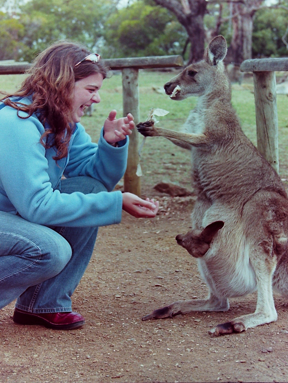 Bronwyn feeds a Joey while its mother steals the paper bag full of food
